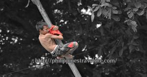 Greased Bamboo Climbing