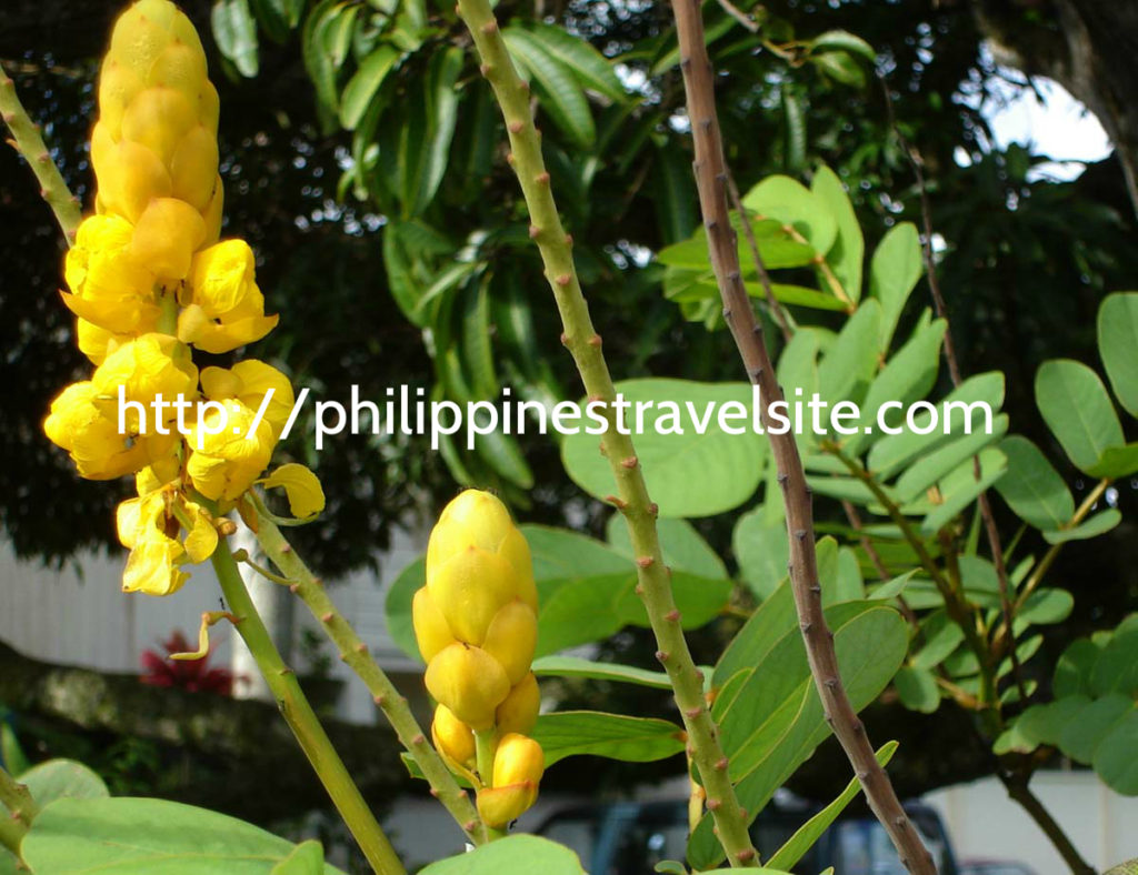 articles on the subject of therapeutic flowers for your philippines