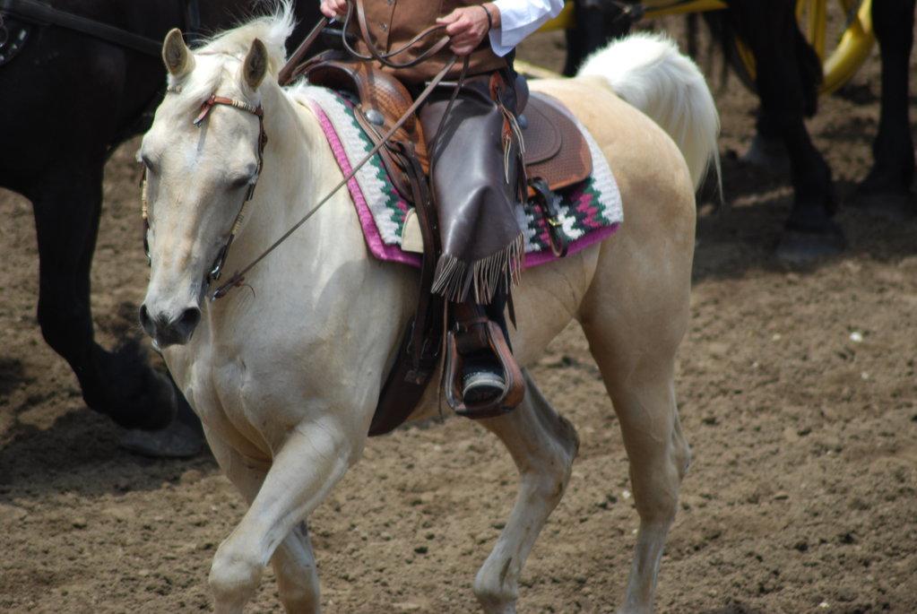 Horse Festival