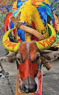 Tamaraw Festival