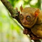 Three interesting animals found in the Philippines