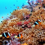 Top 10 Diving Sites in the Philippines You Must Visit